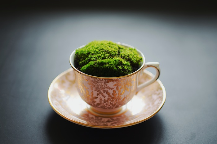moss_in_a_teacup